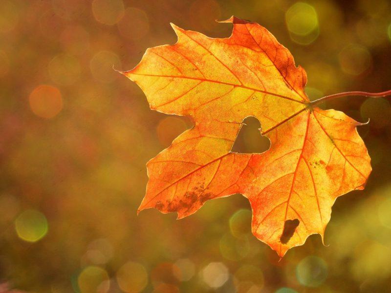 When Autumn magic starts